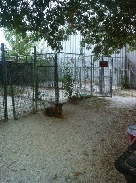 Lone Pine Shelter - Facilities - Dog Kennels